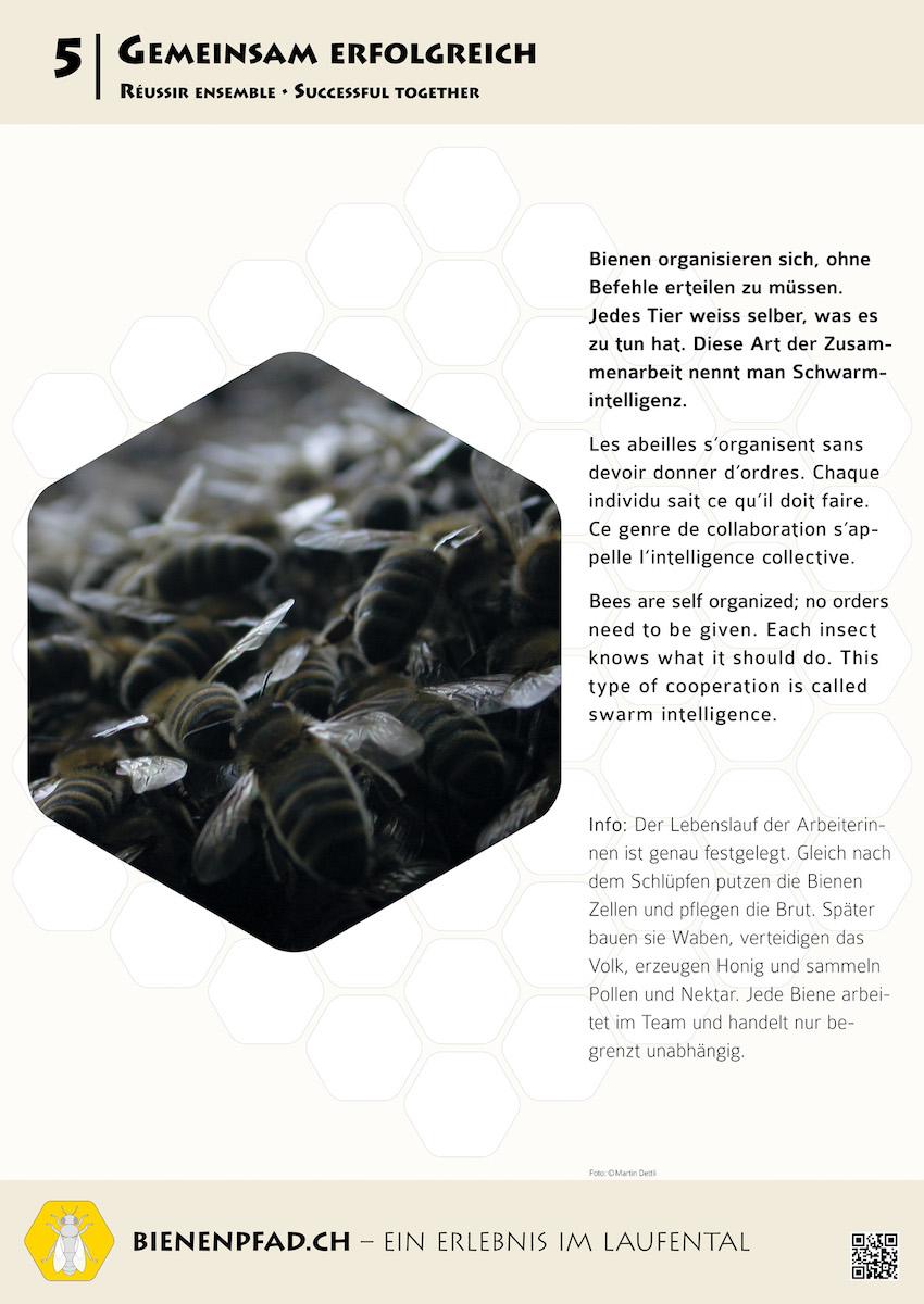 Bienenpfad - Tour